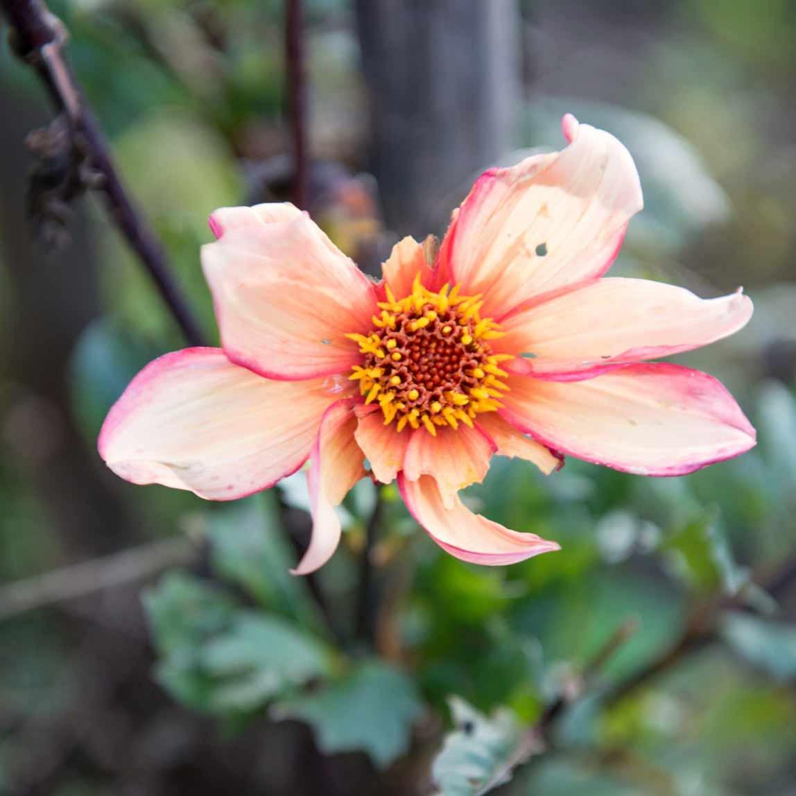 Suze Peters Lezingen Plaagdieren essentieel voor biodiversiteit in de tuin